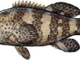 أبحث شخصاً من دولة ارتيريا يكون وكيلنا في ارتيريا لتصدير الأسماك - صورة مصغرة