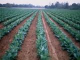 اراضى للبيع اكثر من 20 مزرعة للبيع باسعار لا تقبل المنافسة فقط من مجموعة المتحدون للاراضى - صورة مصغرة