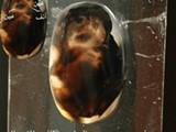وجه غريب وعجيب لة عينين غريبتين في عقيق يمانى خلق رباني نادر - صورة مصغرة
