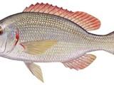 شركه ديما لتوريد الاسماك - صورة مصغرة