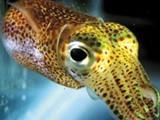 ديما لتوريد الأسماك - صورة مصغرة