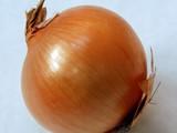 بصل تصدير بصل بلدىبصل احمر جميع انواع البصل والخضروات - صورة مصغرة