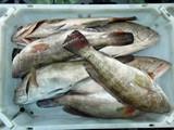 شركة موريتانية ثاني بلد في العالم من حيث الثروة السمكية لتصدير الأ - صورة مصغرة