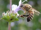 ادوات مناحل و عسل طبيعى - صورة مصغرة