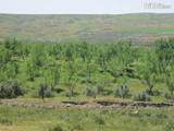 للبيع 100 هكتار بالمغرب موثقة ومحفظة - صورة مصغرة