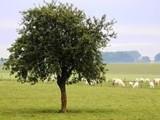 للبيع ارض فلاحية بالمغرب 87 هكتار محفظة - صورة مصغرة