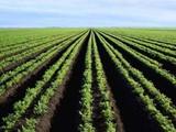أراضي فلاحية شاسعة للبيع في المغرب - صورة مصغرة