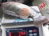سمك بلطى مصرى ممتاز و السعر - صورة مصغرة