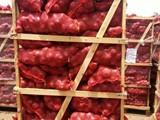بصل أحمر وأبيض للتصدير - صورة مصغرة