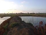 أرض للبيع بعزبة البرج محافظة دمياط - صورة مصغرة