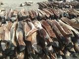 بيع حطب من السودان - صورة مصغرة