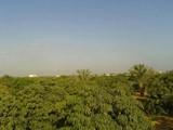 مزارع للبيع في مصر Farms for sale in Egypt - صورة مصغرة
