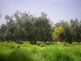 ارض للبيع للاستثمار تقع على طريق قليبيه الهواريه الرئيسي - صورة مصغرة