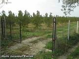 عاجل فرصة للبيع مزرعة عنب وزيتون باقل من سعر البيع - صورة مصغرة
