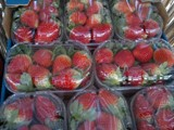 فراولة للتصدير من مصر - صورة مصغرة