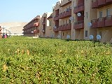 شاليه غرفتين للبيع في مينا ريزورت راس سدر - صورة مصغرة