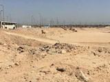 فرصة للجادين أرض للمشاركة 21 ألف متر بالقرب من مول العرب بالشيخ زايد - صورة مصغرة
