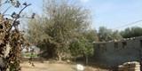 مزرعة للايجار10 فدان بها عنابر تربية مساحة 450 متر واستراحة - صورة مصغرة